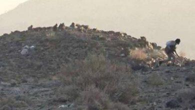 تصویر از ائتلاف سعودی برای فرار از شکست در یمن دست به دامان تروریستهای القاعده شد + نقشه میدانی و عکس